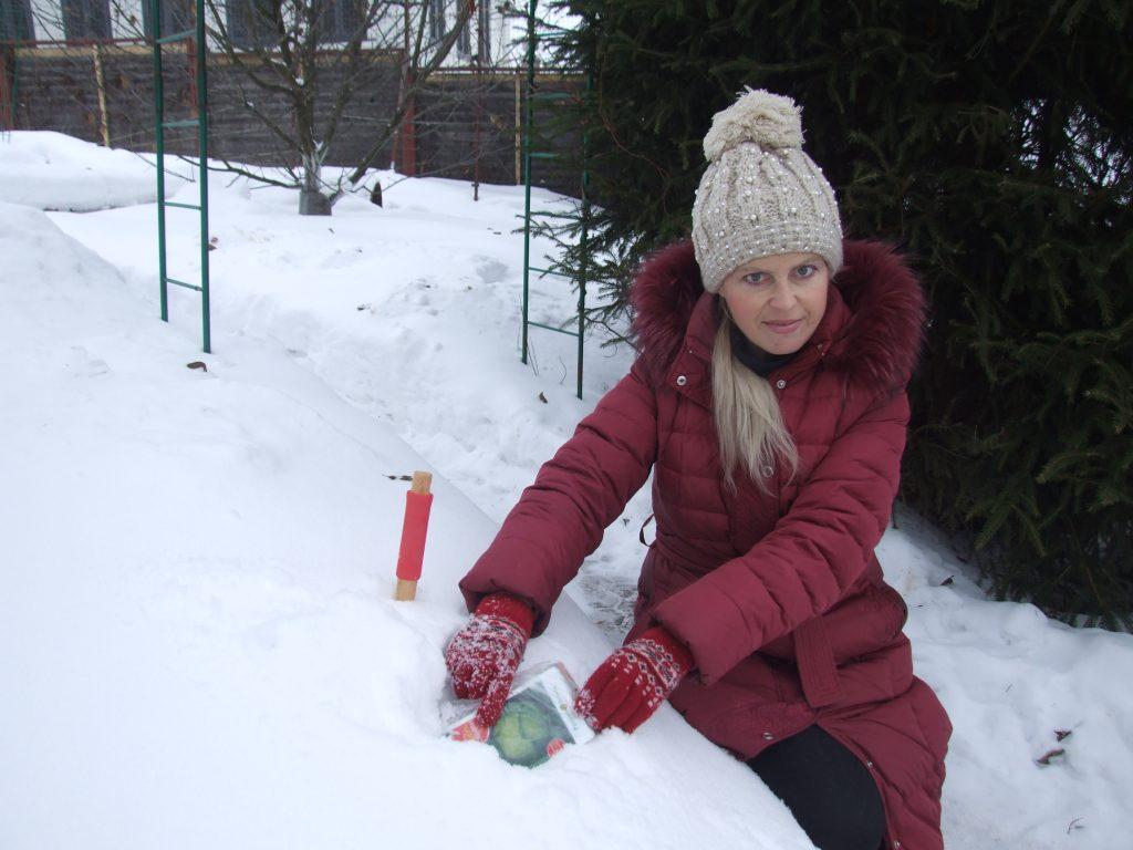 3. Прикопайте пакет с семенами в снег на час